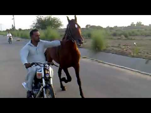 Horse Running On Road With Bike Man || At High Speed || Video Got Viral Must Watch