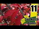Burning Bush - Top Notch Plants Episode 11