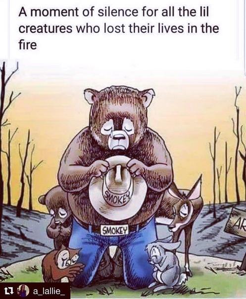 Калифорния в огне В Калифорнии продолжают полыхать пожары, унося не только человеческие жизни, но и жизни диких и домашних животных.В огне погибло по меньшей мере 42 человека.Национальная