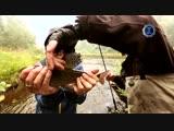 Диалоги о рыбалке. Пермский край. Хариус