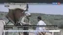 Новости на Россия 24 • Пентагон рассказал о сексуальных преступлениях американских военных