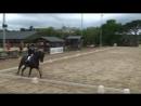 Equestrian Sport | Dressage | Equestrian Video