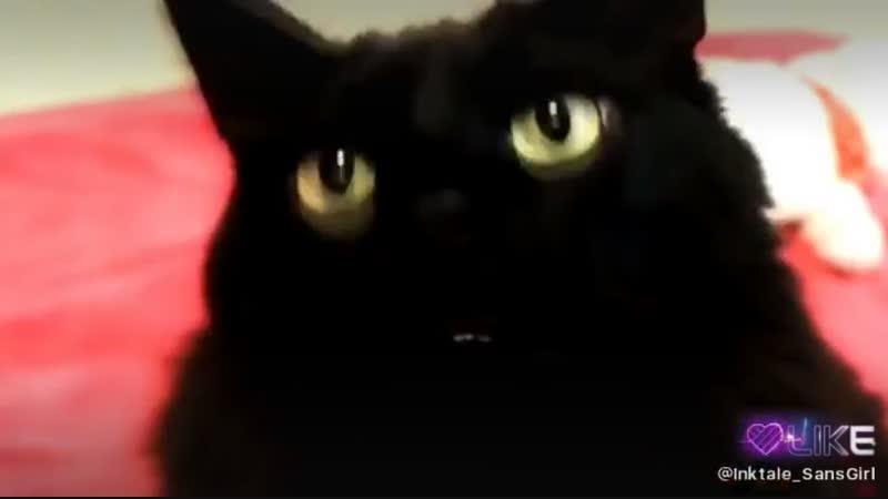 небольшая песенка от наших четвероногих мурчящих котов