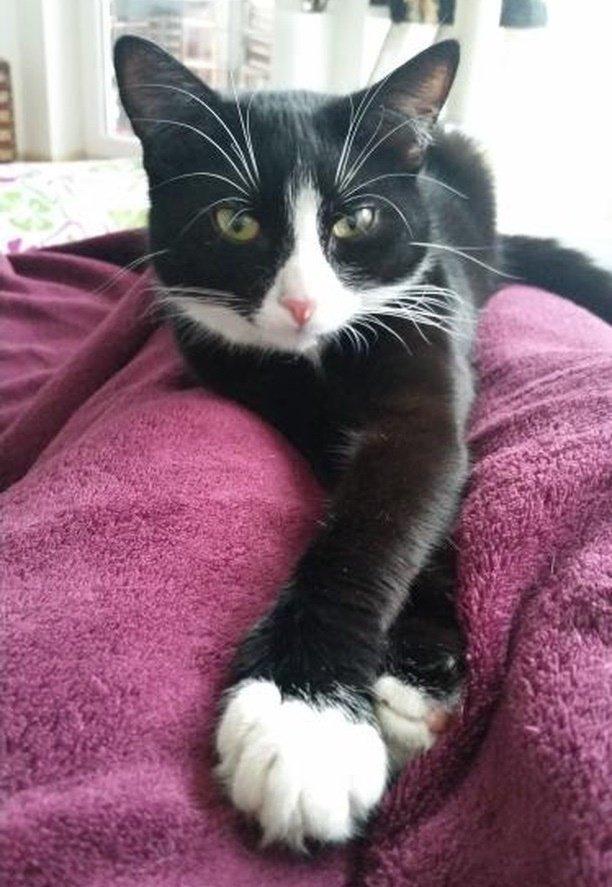 Необычное преображение чёрно-белой кошки