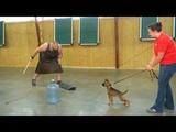 Super Power Puppy