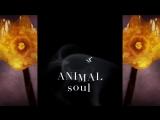 Swing Ninjas - Animal Soul Brighton via New Orleans Jazz