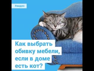 Как выбрать обивку мебели, если в доме есть кот?