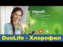 DuoLife Chlorofil (Дуолайф Хлорофил) в жидкой форме. Презентация и отзыв о продукции Дуолайф