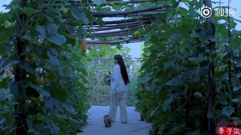 [Lý Tử Thất TV] Vietsub || Đậu Đũa Khô Hầm Móng Giò