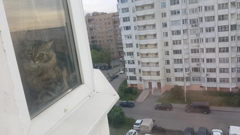 Моя козюлька увидела меня в окне )
