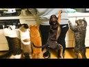 Смешные Коты и Кошки 2018 Приколы с Котами и Кошками 2018 Лучшие Приколы с Животными 31