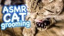 ASMR Cat Grooming 40