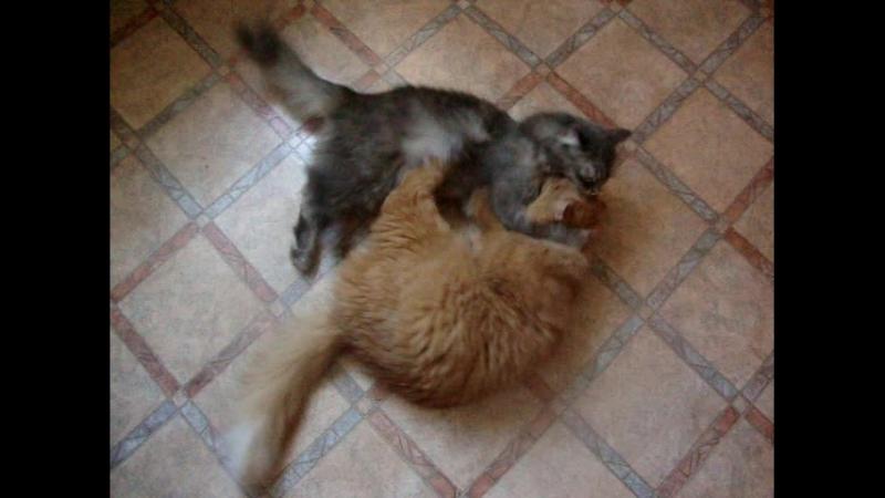 Мурита и Сёма. Любовь иная