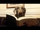 Дикие опыты «Собачьего сердца» - роман Булгакова и реальные опыты над людьми