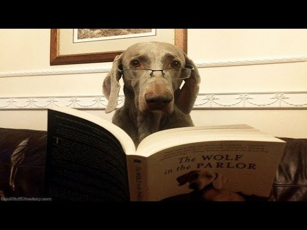 Дикие опыты Собачьего сердца роман Булгакова и реальные опыты над людьми
