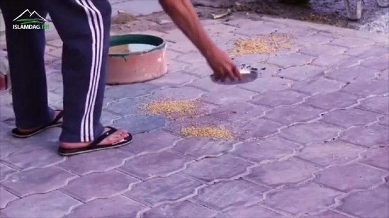 Каким должно быть отношение к животным по исламу.mp4
