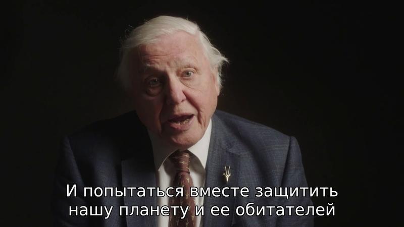 Сэр Дэвид Аттенборо о проекте Львиная доля