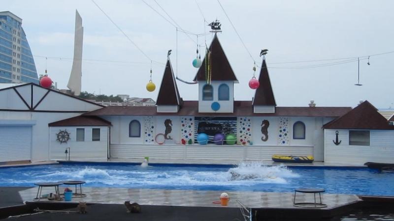 20 мая 2018 г. в Дельфинарии Севастополя.