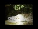 Эбу-гого, съёмка за 1977 год (часть 2)