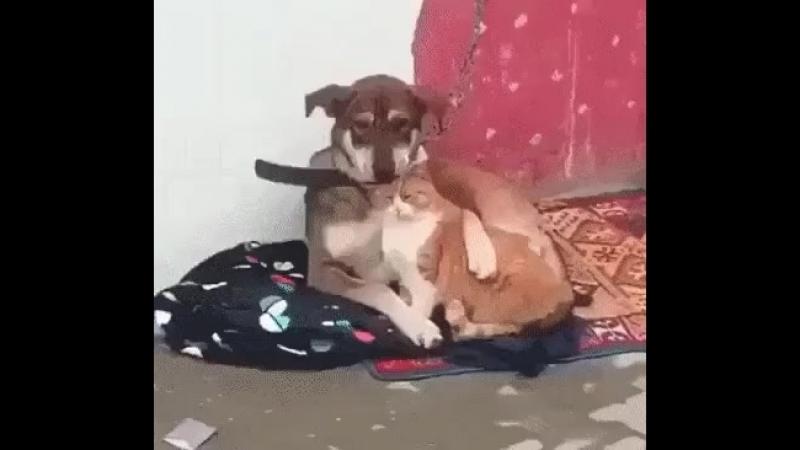 Всё будет хорошо, котан..