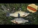 Сырное тесто для рыбалки на карпа, сазана и крупного карася