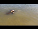 Красноярск. Труп плавает в воде, а рядом купаются детишки. Скоро как в Ганге будет.