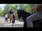 Конные прогулки по лесу:)