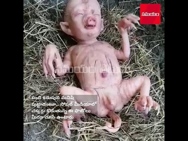 В Кении свинья родила человекоподобного поросенка