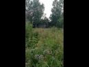 Сверчки Липово