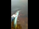 не ради пищи ловят рыбу....... .
