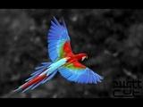 Phattcut - Mona Ki Ngi Xica x Man O To (Song for Ania)