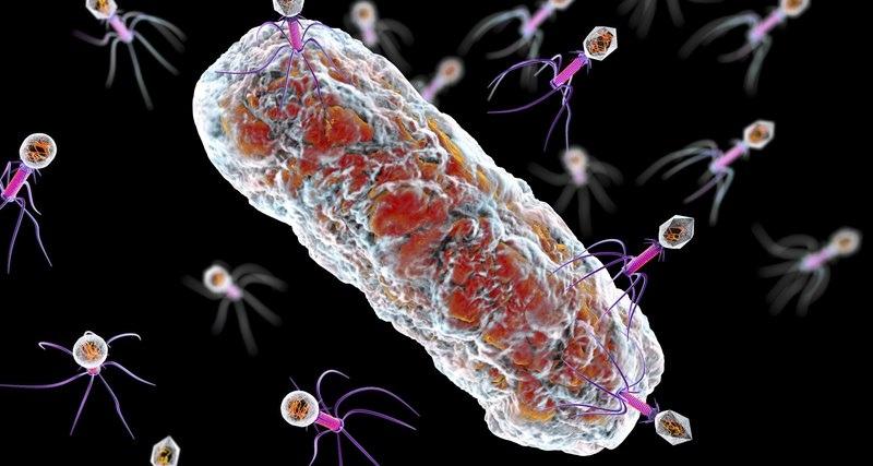 Будущее медицины: вирусы вместо антибиотиков