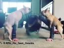 Но нам же не страшны такие обстоятельства!!?? vkovalsky fitness dog отжимания
