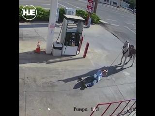 Пьяный мужик решил проехаться на лошади, но долго в седле не продержался