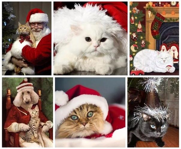 Кошки на самом деле Санта-Клаусы волшебного мира. И встречаются они не случайно: белые — к приятным новостям, рыжие — к деньгам, чёрные — к счастью, серые — к здоровью, а полосатые тигрята — к любви. Лучше всего, конечно, трёхцветные кошки: они сразу мног