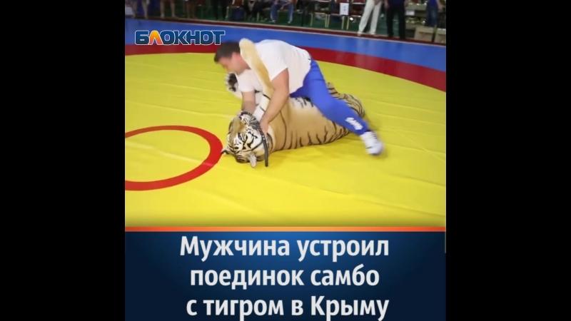 Тигрица Шанель и ее дрессировщик сошлись в поединке самбо на соревновании в Керчи