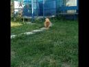 VID_32801024_013720_104.mp4