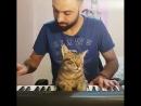 Это - любовь... к музыке...