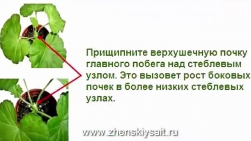 Как формировать огурцы пошаговая инструкция смотреть онлайн без регистрации