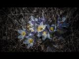18 05 04 Прогулка по майскому лесу