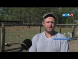 Фермер Максим Шефер из города Покровск, Якутия.