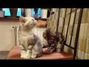V-s.mobiСамые Смешные кошки видео.Прикольные кошки Для детей кошки,коты,приколы.mp4