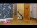 Щенок один дома ВПЕРВЫЕ СКРЫТАЯ КАМЕРА щенячий патруль