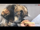 Dog's pastel portrait by Marion Tubiana