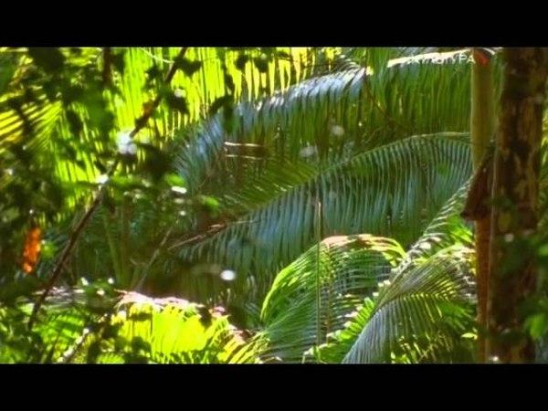 Остров Фрейзер Спящая Богиня