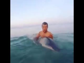 Египетские акулы видели многое, но русских с криками: 'Вау! Дельфины!!!' боятся до сих пор