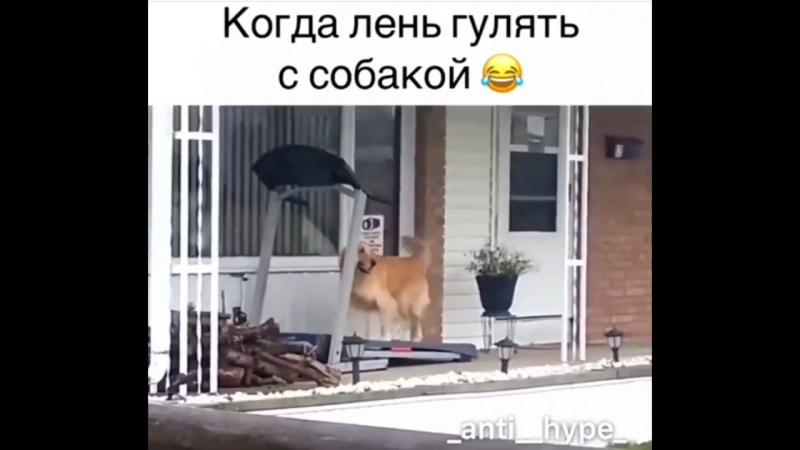 Когда лень гулять с собакой Instamusor