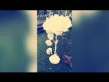 Белая роза в цветущей вишни
