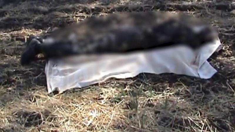 Разгромленную в Иловайском котле колонну украинской армии показали на видео