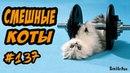Смешные Коты и Кошки ДО СЛЁЗ Приколы с Котами и Кошками 2018